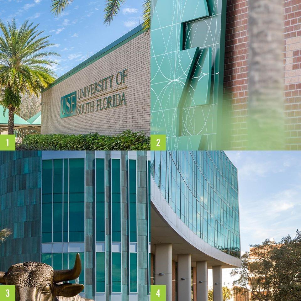 university of south florida .jpg